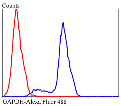 Flow cytometric analysis of GAPDH was done on Hela cells. The cells were fixed, permeabilized and stained with GAPDH antibody at 1/100 dilution (blue) compared with an unlabelled control (cells without incubation with primary antibody; red). After incubation of the primary antibody on room temperature for an hour, the cells was stained with a Alexa Fluor™ 488-conjugated goat anti-rabbit IgG Secondary antibody at 1/500 dilution.
