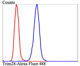Flow cytometric analysis of Hela cells with TRIM28 antibody at 1/100 dilution (blue) compared with an unlabelled control (cells without incubation with primary antibody; red). Alexa Fluor 488-conjugated goat anti-rabbit IgG was used as the secondary antibody.