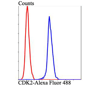 Flow cytometric analysis of Hela cells with CDK2 antibody at 1/100 dilution (blue) compared with an unlabelled control (cells without incubation with primary antibody; red). Alexa Fluor 488-conjugated goat anti-rabbit IgG was used as the secondary antibody.