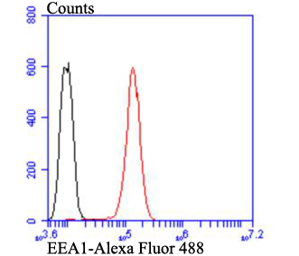 Flow cytometric analysis of EEA1 was done on Hela cells. The cells were fixed, permeabilized and stained with EEA1 antibody at 1/100 dilution (red) compared with an unlabelled control (cells without incubation with primary antibody; black). After incubation of the primary antibody on room temperature for an hour, the cells was stained with a Alexa Fluor™ 488-conjugated goat anti-rabbit IgG Secondary antibody at 1/500 dilution.