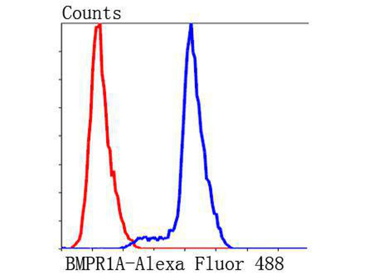 Flow cytometric analysis of Jurkat cells with BMPR1A antibody at 1/50 dilution (blue) compared with an unlabelled control (cells without incubation with primary antibody; red). Alexa Fluor 488-conjugated Goat anti mouse IgG was used as the secondary antibody.