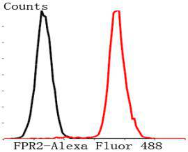 Flow cytometric analysis of Jurkat cells with FPR2 antibody at 1/50 dilution (red) compared with an unlabelled control (cells without incubation with primary antibody; black). Alexa Fluor 488-conjugated Goat anti rabbit IgG was used as the secondary antibody.
