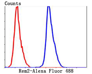 Flow cytometric analysis of HepG2 cells with Rem2 antibody at 1/100 dilution (blue) compared with an unlabelled control (cells without incubation with primary antibody; red). Alexa Fluor® 488-conjugated goat anti-rabbit IgG was used as the secondary antibody.