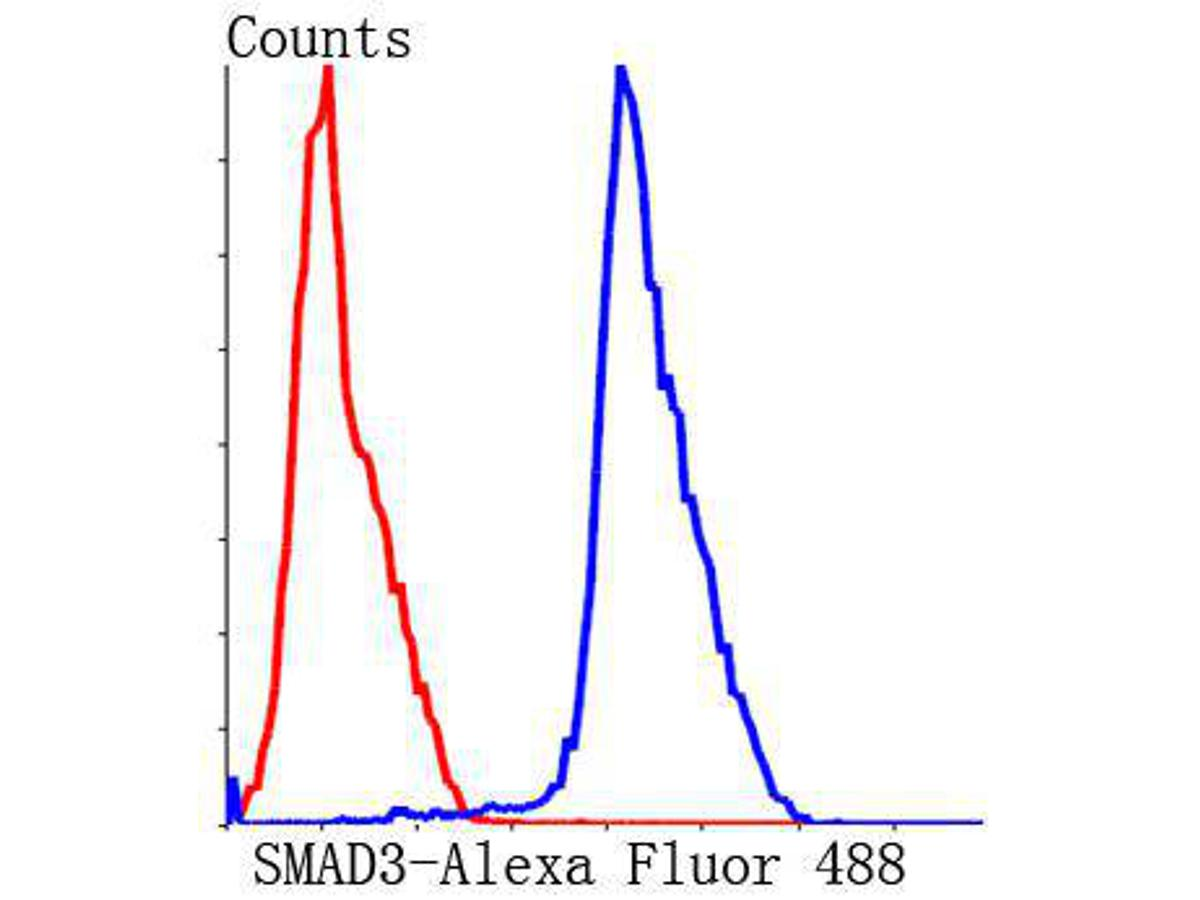 Flow cytometric analysis of Hela cells with SMAD3 antibody at 1/50 dilution (blue) compared with an unlabelled control (cells without incubation with primary antibody; red). Alexa Fluor 488-conjugated Goat anti rabbit IgG was used as the secondary antibody.