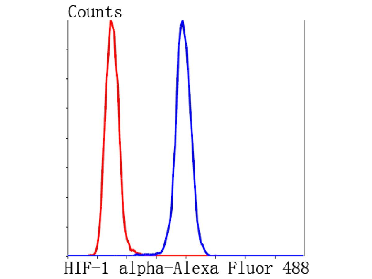 Flow cytometric analysis of Hela cells with HIF-1 alpha antibody at 1/100 dilution (blue) compared with an unlabelled control (cells without incubation with primary antibody; red). Alexa Fluor 488-conjugated Goat anti rabbit IgG was used as the secondary antibody.