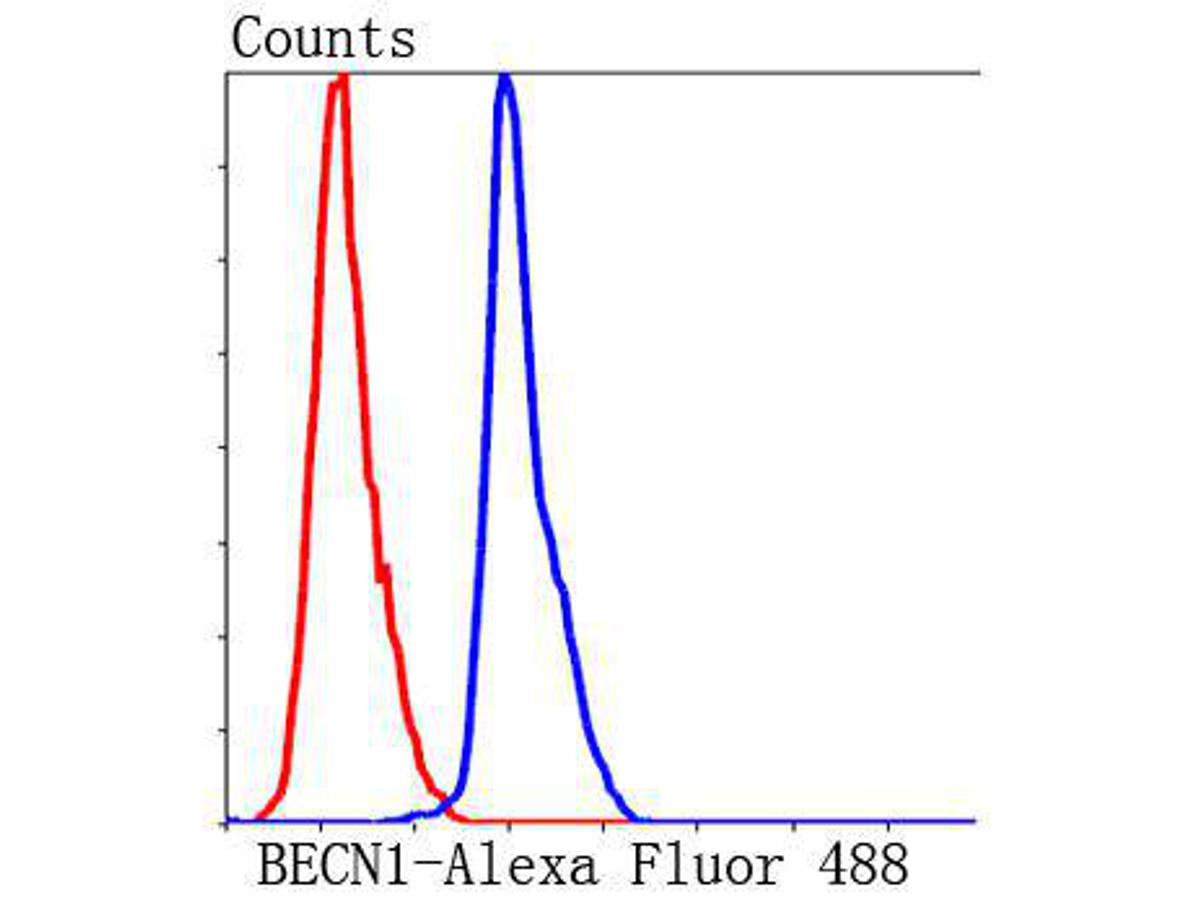 Flow cytometric analysis of HepG2 cells with BECN1 antibody at 1/50 dilution (blue) compared with an unlabelled control (cells without incubation with primary antibody; red). Alexa Fluor 488-conjugated Goat anti rabbit IgG was used as the secondary antibody.