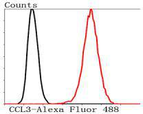 Flow cytometric analysis of Hela cells with CCL3 antibody at 1/50 dilution (red) compared with an unlabelled control (cells without incubation with primary antibody; black). Alexa Fluor 488-conjugated Goat anti rabbit IgG was used as the secondary antibody.