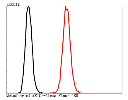 Flow cytometric analysis of SH-SY5Y cells with Metadherin(LYRIC) antibody at 1/100 dilution (red) compared with an unlabelled control (cells without incubation with primary antibody; black).
