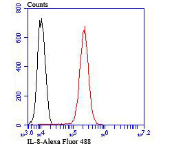 Flow cytometric analysis of HUVEC cells with IL-8 antibody at 1/100 dilution (red) compared with an unlabelled control (cells without incubation with primary antibody; black). Alexa Fluor 488-conjugated goat anti-rabbit IgG was used as the secondary antibody.