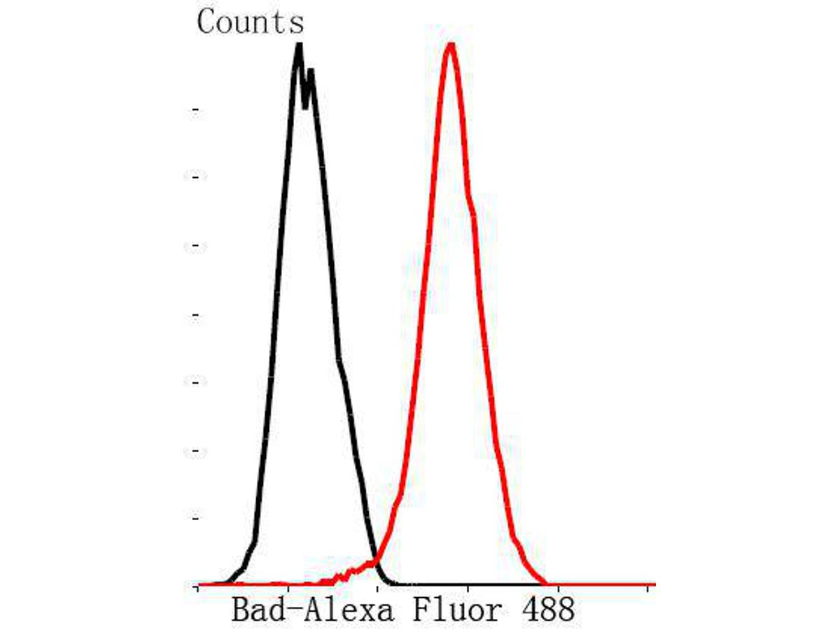Flow cytometric analysis of MCF-7 cells with Bad antibody at 1/50 dilution (red) compared with an unlabelled control (cells without incubation with primary antibody; black). Alexa Fluor 488-conjugated Goat anti rabbit IgG was used as the secondary antibody.