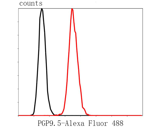 Flow cytometric analysis of PGP9.5 was done on SH-SY5Y cells. The cells were fixed, permeabilized and stained with the primary antibody (R1511-8, 1/50) (red). After incubation of the primary antibody at room temperature for an hour, the cells were stained with a Alexa Fluor 488-conjugated Goat anti-Rabbit IgG Secondary antibody at 1/1000 dilution for 30 minutes.Unlabelled sample was used as a control (cells without incubation with primary antibody; black).