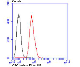 Flow cytometric analysis of MCF-7 cells with Glypican-1 antibody at 1/100 dilution (red) compared with an unlabelled control (cells without incubation with primary antibody; black).