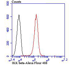 Flow cytometric analysis of A549 cells with IKK beta antibody at 1/100 dilution (red) compared with an unlabelled control (cells without incubation with primary antibody; black).