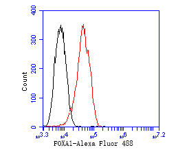 Flow cytometric analysis of FOXA1 was done on MCF-7 cells. The cells were fixed, permeabilized and stained with the primary antibody (EM1902-34, 1/50) (red). After incubation of the primary antibody at room temperature for an hour, the cells were stained with a Alexa Fluor 488-conjugated Goat anti-Mouse IgG Secondary antibody at 1/1000 dilution for 30 minutes.Unlabelled sample was used as a control (cells without incubation with primary antibody; black).