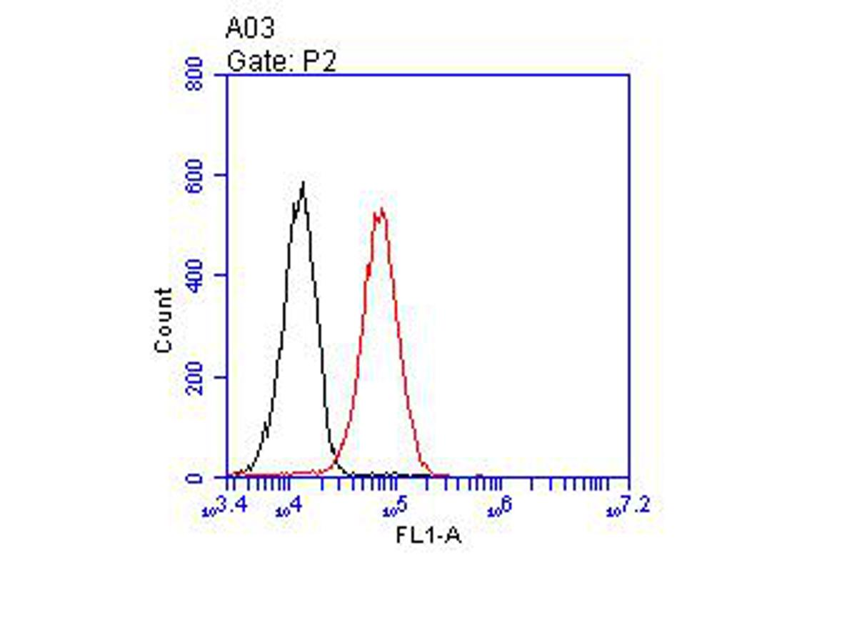 Flow cytometric analysis of CD166 was done on THP-1 cells. The cells were fixed, permeabilized and stained with the primary antibody (EM1902-36, 1/100) (red). After incubation of the primary antibody at room temperature for an hour, the cells were stained with a Alexa Fluor 488-conjugated goat anti-Mouse IgG Secondary antibody at 1/500 dilution for 30 minutes.Unlabelled sample was used as a control (cells without incubation with primary antibody; blcak).