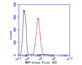 Flow cytometric analysis of MFF was done on K562 cells. The cells were fixed, permeabilized and stained with the primary antibody (ER1902-93, 1/50) (red). After incubation of the primary antibody at room temperature for an hour, the cells were stained with a Alexa Fluor 488-conjugated Goat anti-Rabbit IgG Secondary antibody at 1/1000 dilution for 30 minutes.Unlabelled sample was used as a control (cells without incubation with primary antibody; black).