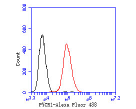 Flow cytometric analysis of PYCR1 was done on HepG2 cells. The cells were fixed, permeabilized and stained with the primary antibody (ER1902-94, 1/50) (red). After incubation of the primary antibody at room temperature for an hour, the cells were stained with a Alexa Fluor 488-conjugated Goat anti-Rabbit IgG Secondary antibody at 1/1000 dilution for 30 minutes.Unlabelled sample was used as a control (cells without incubation with primary antibody; black).