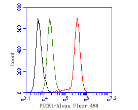 Flow cytometric analysis of PICK1 was done on SH-SY5Y cells. The cells were fixed, permeabilized and stained with the primary antibody (ER1902-97, 1ug/ml) (red) compared with Rabbit IgG, monoclonal  - Isotype Control (green). After incubation of the primary antibody at +4℃ for 1 hour, the cells were stained with a Alexa Fluor®488 conjugate-Goat anti-Rabbit IgG Secondary antibody at 1/1,000 dilution for 30 minutes at +4℃ (dark incubation).Unlabelled sample was used as a control (cells without incubation with primary antibody; black).