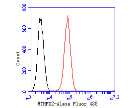 Flow cytometric analysis of MTHFD2 was done on Daudi cells. The cells were fixed, permeabilized and stained with the primary antibody (ER1902-98, 1/50) (red). After incubation of the primary antibody at room temperature for an hour, the cells were stained with a Alexa Fluor 488-conjugated Goat anti-Rabbit IgG Secondary antibody at 1/1000 dilution for 30 minutes.Unlabelled sample was used as a control (cells without incubation with primary antibody; black).