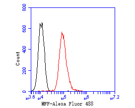 Flow cytometric analysis of MFF was done on HepG2 cells. The cells were fixed, permeabilized and stained with the primary antibody (ER2001-01, 1/50) (red). After incubation of the primary antibody at room temperature for an hour, the cells were stained with a Alexa Fluor 488-conjugated Goat anti-Rabbit IgG Secondary antibody at 1/1000 dilution for 30 minutes.Unlabelled sample was used as a control (cells without incubation with primary antibody; black).