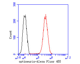 Flow cytometric analysis of Optineurin was done on MCF-7 cells. The cells were fixed, permeabilized and stained with the primary antibody (ER2001-02, 1/50) (red). After incubation of the primary antibody at room temperature for an hour, the cells were stained with a Alexa Fluor 488-conjugated Goat anti-Rabbit IgG Secondary antibody at 1/1000 dilution for 30 minutes.Unlabelled sample was used as a control (cells without incubation with primary antibody; black).