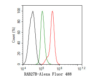 Flow cytometric analysis of RAB27B was done on A549 cells. The cells were fixed, permeabilized and stained with the primary antibody (ER2001-10, 1/50) (red). After incubation of the primary antibody at room temperature for an hour, the cells were stained with a Alexa Fluor 488-conjugated Goat anti-Rabbit IgG Secondary antibody at 1/1000 dilution for 30 minutes.Unlabelled sample was used as a control (cells without incubation with primary antibody; black).