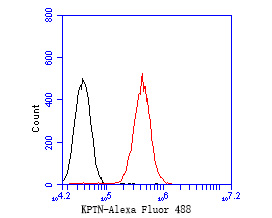 Flow cytometric analysis of KPTN was done on SH-SY5Y cells. The cells were fixed, permeabilized and stained with the primary antibody (ER2001-17, 1/50) (red). After incubation of the primary antibody at room temperature for an hour, the cells were stained with a Alexa Fluor 488-conjugated Goat anti-Rabbit IgG Secondary antibody at 1/1000 dilution for 30 minutes.Unlabelled sample was used as a control (cells without incubation with primary antibody; black).