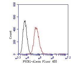 Flow cytometric analysis of PYCR1 was done on HepG2 cells. The cells were fixed, permeabilized and stained with the primary antibody (ER2001-18, 1/50) (red). After incubation of the primary antibody at room temperature for an hour, the cells were stained with a Alexa Fluor 488-conjugated Goat anti-Rabbit IgG Secondary antibody at 1/1000 dilution for 30 minutes.Unlabelled sample was used as a control (cells without incubation with primary antibody; black).