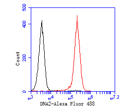 Flow cytometric analysis of DNA2 was done on HL-60 cells. The cells were fixed, permeabilized and stained with the primary antibody (ER2001-20, 1/50) (red). After incubation of the primary antibody at room temperature for an hour, the cells were stained with a Alexa Fluor 488-conjugated Goat anti-Rabbit IgG Secondary antibody at 1/1000 dilution for 30 minutes.Unlabelled sample was used as a control (cells without incubation with primary antibody; black).