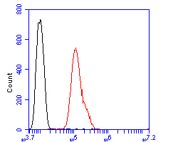 Flow cytometric analysis of EPHA2 was done on SHSY5Y cells. The cells were fixed, permeabilized and stained with the primary antibody (ER2001-31, 1/50) (red). After incubation of the primary antibody at room temperature for an hour, the cells were stained with a Alexa Fluor 488-conjugated Goat anti-Rabbit IgG Secondary antibody at 1/1000 dilution for 30 minutes.Unlabelled sample was used as a control (cells without incubation with primary antibody; black).