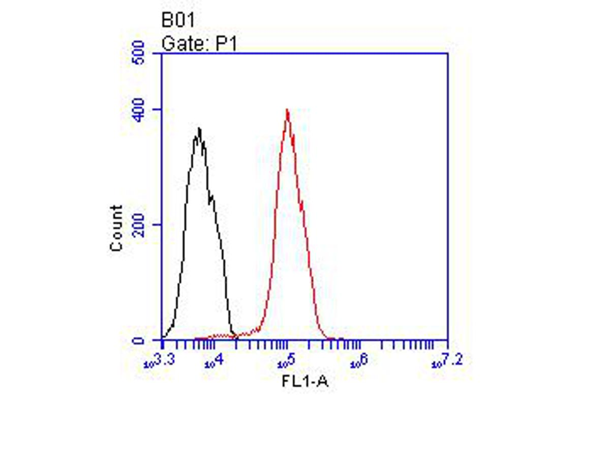Flow cytometric analysis of Androgen Receptor was done on MCF-7 cells. The cells were fixed, permeabilized and stained with the primary antibody (ER2001-34, 1/100) (red). After incubation of the primary antibody at room temperature for an hour, the cells were stained with a Alexa Fluor 488-conjugated goat anti-rabbit IgG Secondary antibody at 1/500 dilution for 30 minutes.Unlabelled sample was used as a control (cells without incubation with primary antibody; blcak).