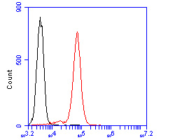 Flow cytometric analysis of CD28 was done on Jurkat cells. The cells were fixed, permeabilized and stained with the primary antibody (ER2001-42, 1/50) (red). After incubation of the primary antibody at room temperature for an hour, the cells were stained with a Alexa Fluor 488-conjugated Goat anti-Rabbit IgG Secondary antibody at 1/1000 dilution for 30 minutes.Unlabelled sample was used as a control (cells without incubation with primary antibody; black).