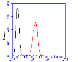 Flow cytometric analysis of Foxk2 was done on SHSY5Y cells. The cells were fixed, permeabilized and stained with the primary antibody (ER2001-47, 1/50) (red). After incubation of the primary antibody at room temperature for an hour, the cells were stained with a Alexa Fluor 488-conjugated Goat anti-Rabbit IgG Secondary antibody at 1/1000 dilution for 30 minutes.Unlabelled sample was used as a control (cells without incubation with primary antibody; black).