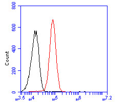 Flow cytometric analysis of ATBF1 was done on HepG2 cells. The cells were fixed, permeabilized and stained with the primary antibody (ER2001-49, 1/50) (red). After incubation of the primary antibody at room temperature for an hour, the cells were stained with a Alexa Fluor 488-conjugated Goat anti-Rabbit IgG Secondary antibody at 1/1000 dilution for 30 minutes.Unlabelled sample was used as a control (cells without incubation with primary antibody; black).