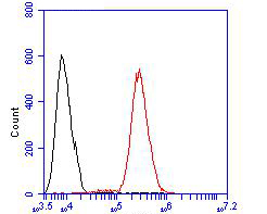 Flow cytometric analysis of SSB was done on HCT116 cells. The cells were fixed, permeabilized and stained with the primary antibody (ER2001-50, 1/50) (red). After incubation of the primary antibody at room temperature for an hour, the cells were stained with a Alexa Fluor 488-conjugated Goat anti-Rabbit IgG Secondary antibody at 1/1000 dilution for 30 minutes.Unlabelled sample was used as a control (cells without incubation with primary antibody; black).