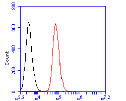Flow cytometric analysis of eIF-6 was done on SW620 cells. The cells were fixed, permeabilized and stained with the primary antibody (ER2001-54, 1/50) (red). After incubation of the primary antibody at room temperature for an hour, the cells were stained with a Alexa Fluor 488-conjugated Goat anti-Rabbit IgG Secondary antibody at 1/1000 dilution for 30 minutes.Unlabelled sample was used as a control (cells without incubation with primary antibody; black).