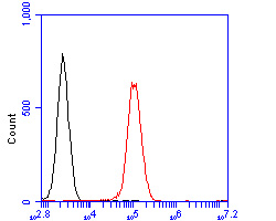 Flow cytometric analysis of MTHFD2 was done on Daudi cells. The cells were fixed, permeabilized and stained with the primary antibody (ER2001-62, 1/50) (red). After incubation of the primary antibody at room temperature for an hour, the cells were stained with a Alexa Fluor 488-conjugated Goat anti-Rabbit IgG Secondary antibody at 1/1000 dilution for 30 minutes.Unlabelled sample was used as a control (cells without incubation with primary antibody; black).