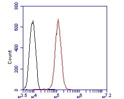 Flow cytometric analysis of MVK was done on HepG2 cells. The cells were fixed, permeabilized and stained with the primary antibody (ER2001-64, 1/50) (red). After incubation of the primary antibody at room temperature for an hour, the cells were stained with a Alexa Fluor 488-conjugated Goat anti-Rabbit IgG Secondary antibody at 1/1000 dilution for 30 minutes.Unlabelled sample was used as a control (cells without incubation with primary antibody; black).