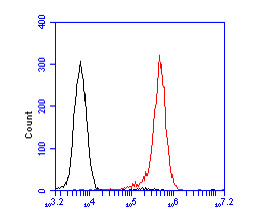 Flow cytometric analysis of Cullin 4B was done on Daudi cells. The cells were fixed, permeabilized and stained with the primary antibody (ER2001-65, 1/50) (red). After incubation of the primary antibody at room temperature for an hour, the cells were stained with a Alexa Fluor 488-conjugated Goat anti-Rabbit IgG Secondary antibody at 1/1000 dilution for 30 minutes.Unlabelled sample was used as a control (cells without incubation with primary antibody; black).