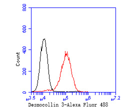 Flow cytometric analysis of Desmocollin 3 was done on A431 cells. The cells were fixed, permeabilized and stained with the primary antibody (ET7111-26, 1/50) (red). After incubation of the primary antibody at room temperature for an hour, the cells were stained with a Alexa Fluor 488-conjugated Goat anti-Rabbit IgG Secondary antibody at 1/1000 dilution for 30 minutes.Unlabelled sample was used as a control (cells without incubation with primary antibody; black).