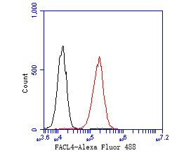 Flow cytometric analysis of FACL4 was done on HepG2 cells. The cells were fixed, permeabilized and stained with the primary antibody (ET7111-43, 1/50) (red). After incubation of the primary antibody at room temperature for an hour, the cells were stained with a Alexa Fluor 488-conjugated Goat anti-Rabbit IgG Secondary antibody at 1/1000 dilution for 30 minutes.Unlabelled sample was used as a control (cells without incubation with primary antibody; black).