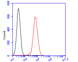Flow cytometric analysis of PLCG2 was done on Daudi cells. The cells were fixed, permeabilized and stained with the primary antibody (R1512-4, 1/50) (red). After incubation of the primary antibody at room temperature for an hour, the cells were stained with a Alexa Fluor 488-conjugated Goat anti-Rabbit IgG Secondary antibody at 1/1000 dilution for 30 minutes.Unlabelled sample was used as a control (cells without incubation with primary antibody; black).