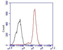 Flow cytometric analysis of CD133 was done on F9 cells. The cells were fixed, permeabilized and stained with the primary antibody (0804-5, 1/50) (red). After incubation of the primary antibody at room temperature for an hour, the cells were stained with a Alexa Fluor 488-conjugated Goat anti-Rabbit IgG Secondary antibody at 1/1000 dilution for 30 minutes.Unlabelled sample was used as a control (cells without incubation with primary antibody; black).