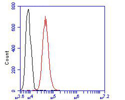 Flow cytometric analysis of ASH2L was done on Siha cells. The cells were fixed, permeabilized and stained with the primary antibody (R1408-1, 1/50) (red). After incubation of the primary antibody at room temperature for an hour, the cells were stained with a Alexa Fluor 488-conjugated Goat anti-Rabbit IgG Secondary antibody at 1/1000 dilution for 30 minutes.Unlabelled sample was used as a control (cells without incubation with primary antibody; black).