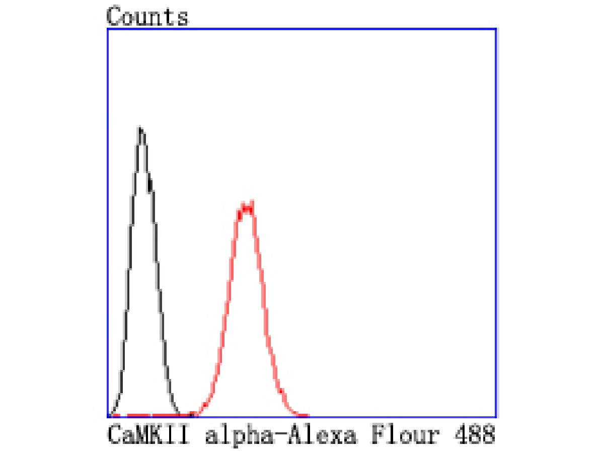 Flow cytometric analysis of CaMKII alpha was done on SH-SY5Y cells. The cells were fixed, permeabilized and stained with the primary antibody (ET1703-54, 1/50) (red). After incubation of the primary antibody at room temperature for an hour, the cells were stained with a Alexa Fluor 488-conjugated Goat anti-Rabbit IgG Secondary antibody at 1/1000 dilution for 30 minutes.Unlabelled sample was used as a control (cells without incubation with primary antibody; black).
