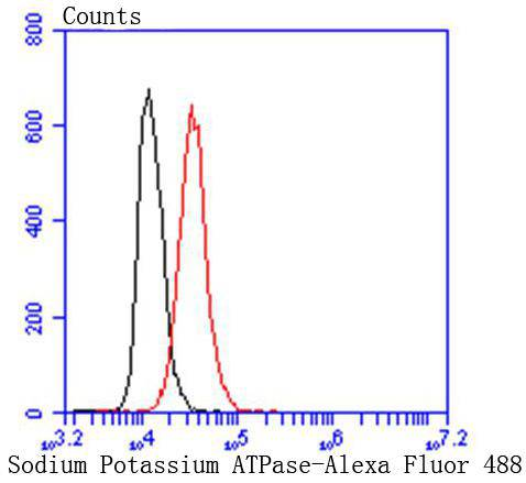 Flow cytometric analysis of Sodium Potassium ATPase was done on Hela cells. The cells were fixed, permeabilized and stained with the primary antibody (ET1609-76, 1/50) (red). After incubation of the primary antibody at room temperature for an hour, the cells were stained with a Alexa Fluor 488-conjugated Goat anti-Rabbit IgG Secondary antibody at 1/1000 dilution for 30 minutes.Unlabelled sample was used as a control (cells without incubation with primary antibody; black).