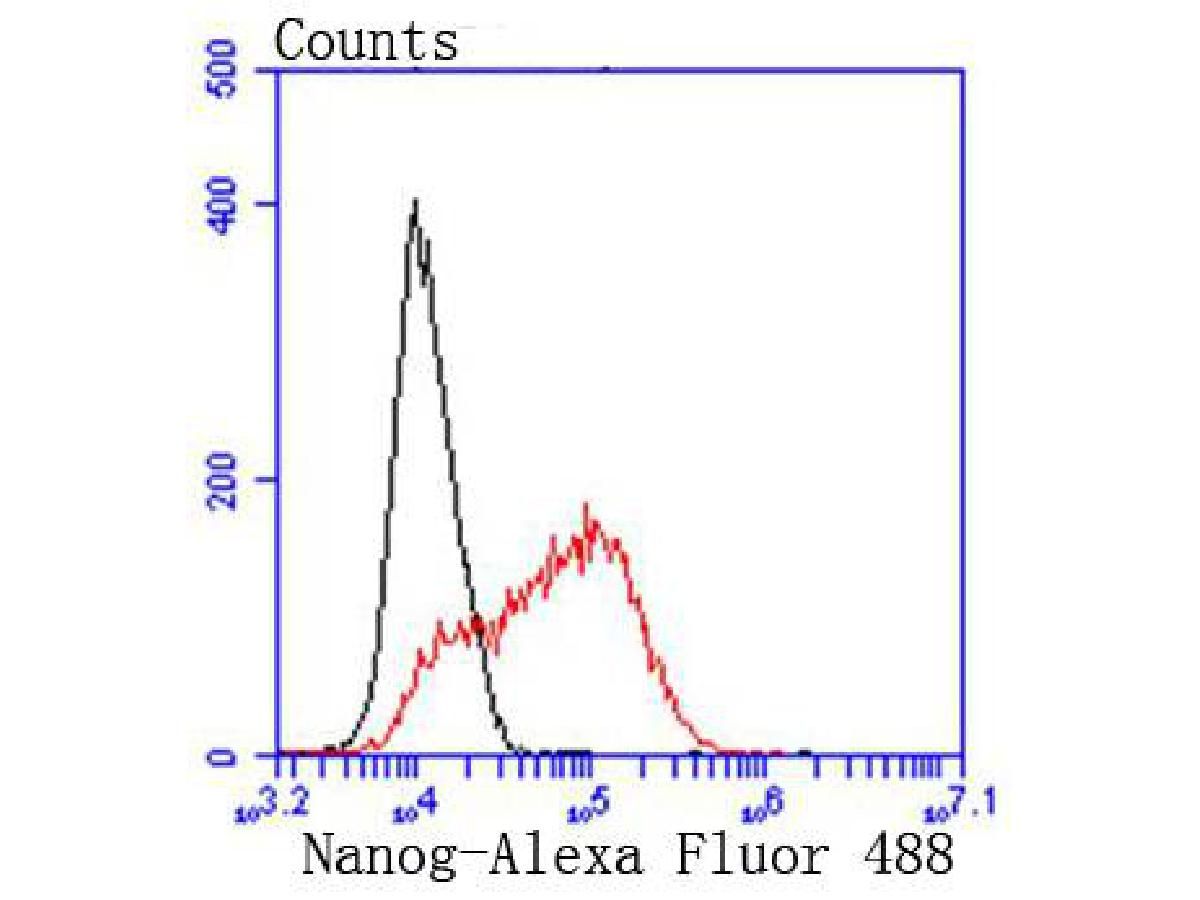 Flow cytometric analysis of Nanog was done on NCCIT cells. The cells were fixed, permeabilized and stained with the primary antibody (ET1610-2, 1/50) (red). After incubation of the primary antibody at room temperature for an hour, the cells were stained with a Alexa Fluor 488-conjugated Goat anti-Rabbit IgG Secondary antibody at 1/1000 dilution for 30 minutes.Unlabelled sample was used as a control (cells without incubation with primary antibody; black).