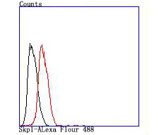 Flow cytometric analysis of Skp1 was done on Hela cells. The cells were fixed, permeabilized and stained with the primary antibody (ET1705-43, 1/50) (red). After incubation of the primary antibody at room temperature for an hour, the cells were stained with a Alexa Fluor 488-conjugated Goat anti-Rabbit IgG Secondary antibody at 1/1000 dilution for 30 minutes.Unlabelled sample was used as a control (cells without incubation with primary antibody; black).