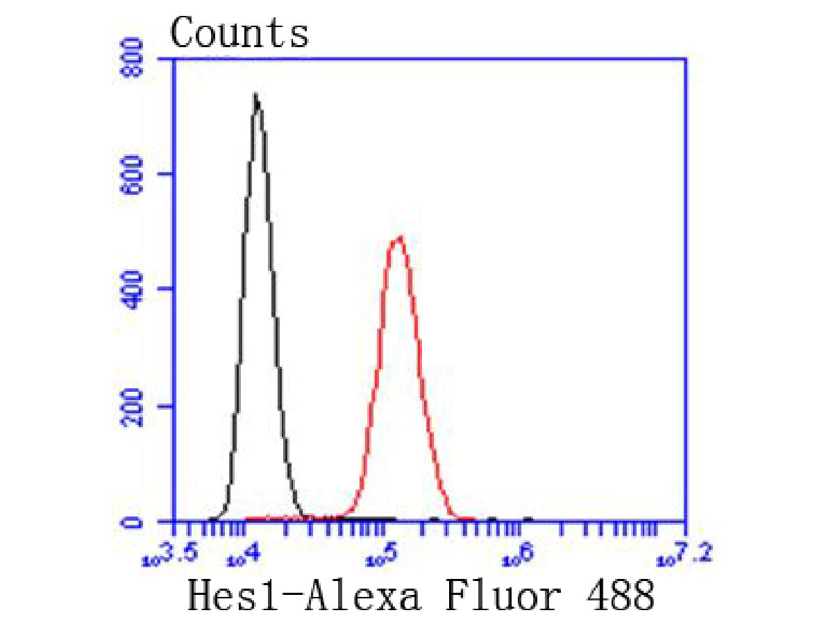 Flow cytometric analysis of Hes1 was done on SH-SY5Y cells. The cells were fixed, permeabilized and stained with the primary antibody (ET1610-97, 1/50) (red). After incubation of the primary antibody at room temperature for an hour, the cells were stained with a Alexa Fluor 488-conjugated Goat anti-Rabbit IgG Secondary antibody at 1/1000 dilution for 30 minutes.Unlabelled sample was used as a control (cells without incubation with primary antibody; black).