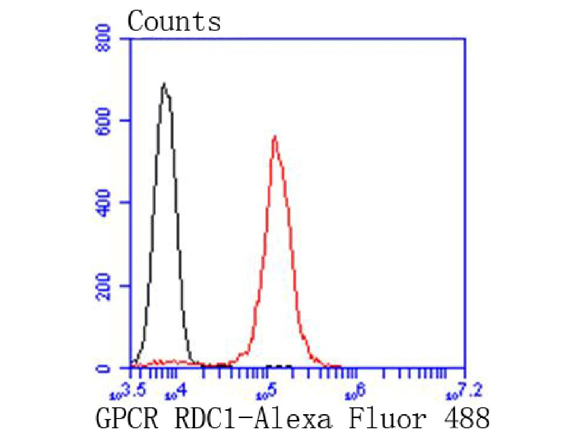 Flow cytometric analysis of RDC1 was done on Jurkat cells. The cells were fixed, permeabilized and stained with the primary antibody (ET1611-3, 1/50) (red). After incubation of the primary antibody at room temperature for an hour, the cells were stained with a Alexa Fluor 488-conjugated Goat anti-Rabbit IgG Secondary antibody at 1/1000 dilution for 30 minutes.Unlabelled sample was used as a control (cells without incubation with primary antibody; black).